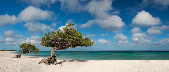 Eagle Beach, Aruba.  This print must be custom ordered and framed due to odd size.  Please contact me.